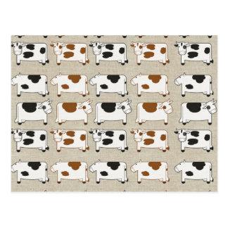 Cows Cows Cows Postcard