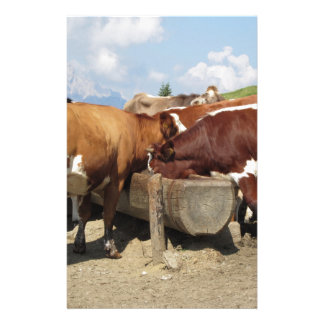 Cows drinking water from a trough custom stationery