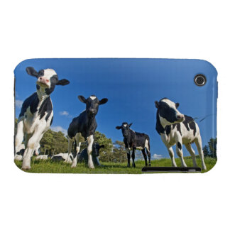 Cows feeding on pasture iPhone 3 covers