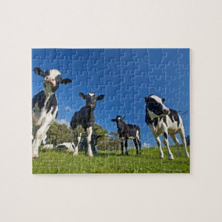 Cows feeding on pasture jigsaw puzzle