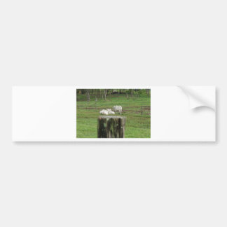 COWS & FENCE POST RURAL QUEENSLAND AUSTRALIA BUMPER STICKER
