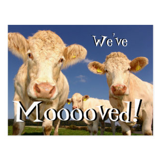 Cows funny We've Moved New Address Postcard
