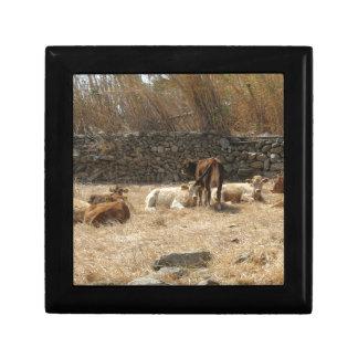 Cows Gift Box