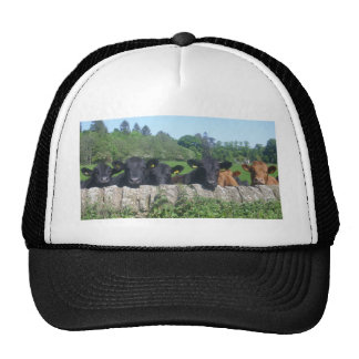 cows hat