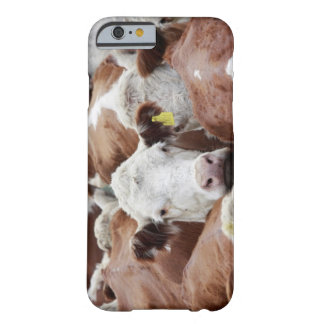 Cows in a corral barely there iPhone 6 case