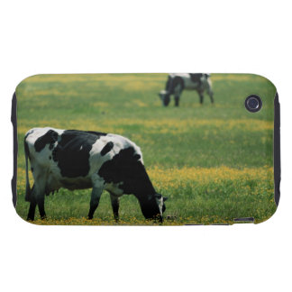 Cows in a Field of Flowers iPhone 3 Tough Cover