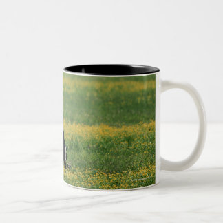 Cows in a Field of Flowers Two-Tone Coffee Mug