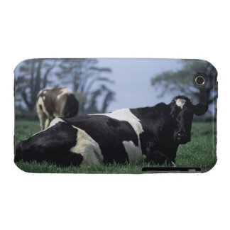cows in a pasture iPhone 3 Case-Mate cases