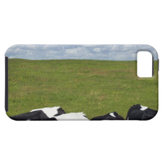 Cows in a pasture. case for the iPhone 5