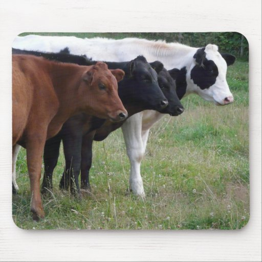Cows in a Row Mousepads