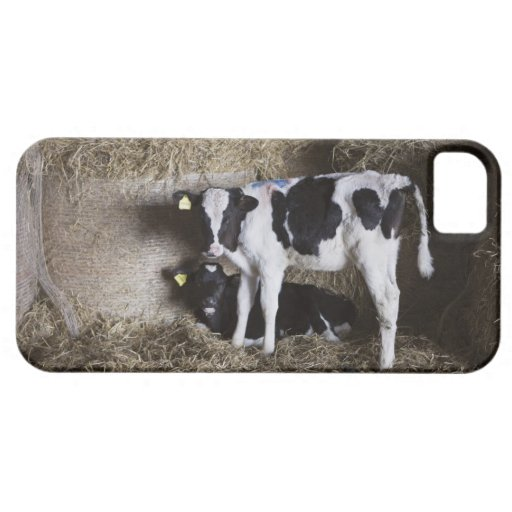Cows in barn 3 iPhone 5 case