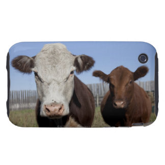 Cows in fenced area tough iPhone 3 case