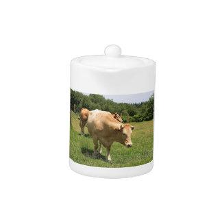 Cows in field, El Camino, Spain 2