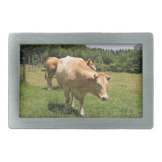 Cows in field, El Camino, Spain 2 Belt Buckles