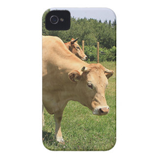Cows in field, El Camino, Spain 2 Case-Mate iPhone 4 Cases