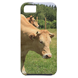 Cows in field, El Camino, Spain 2 iPhone 5 Cases