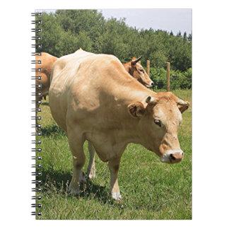 Cows in field, El Camino, Spain 2 Notebooks