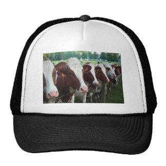 Cows in Row Trucker Hats