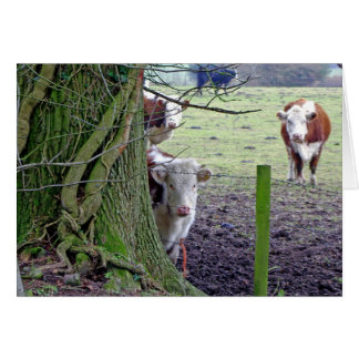 Cows in the field card