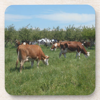 Cows In The Pasture Coaster