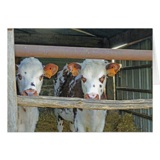 Cows in the shed card