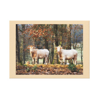 Cows in woodland, France Canvas Print