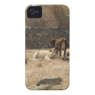 Cows iPhone 4 Case-Mate Case