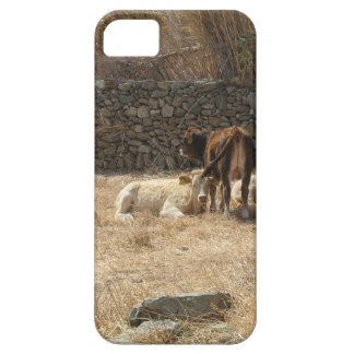 Cows iPhone 5 Cover