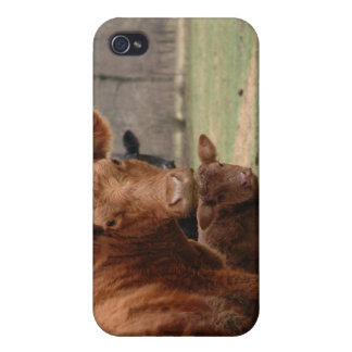 cows case for iPhone 4