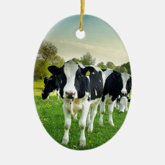 Cows love to stare ceramic oval decoration
