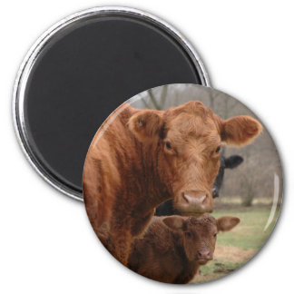 cows magnets