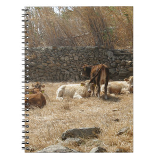 Cows Notebooks