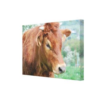 Cows of calves of cattle - photo: Jean Louis Canvas Print