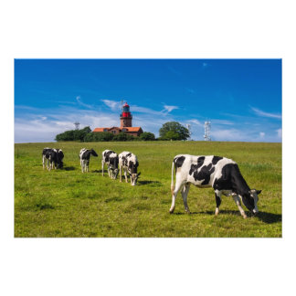 Cows on a meadow with lighthouse photo
