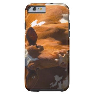 Cows on farm iPhone 6 case
