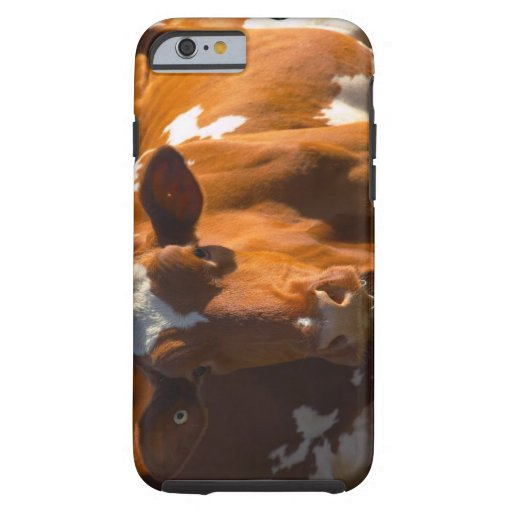 Cows on farm iPhone 6 case