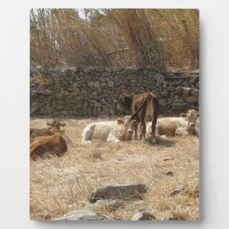 Cows Plaque