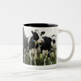 Cows standing in a row looking at camera mugs