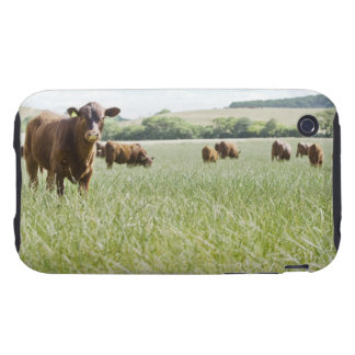 Cows standing in meadow tough iPhone 3 covers