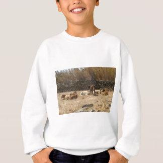 Cows Sweatshirt