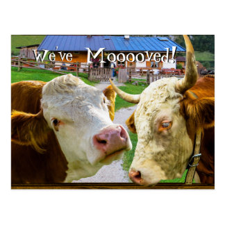 Cows too funny We've Moved New Address Postcard
