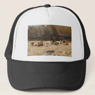 Cows Trucker Hat