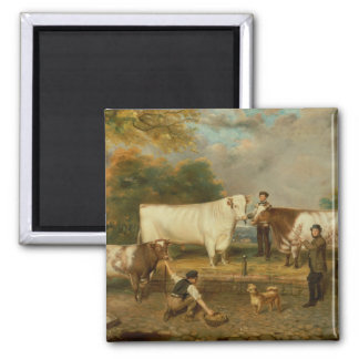 Cows with a herdsman square magnet