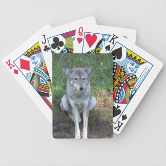 Coyote Collection Bicycle Playing Cards