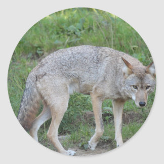 Coyote Collection Classic Round Sticker