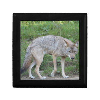 Coyote Collection Gift Box