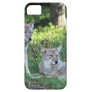 Coyote Collection iPhone 5 Cases