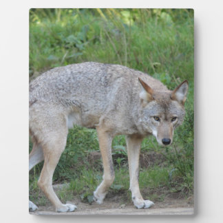 Coyote Collection Plaque