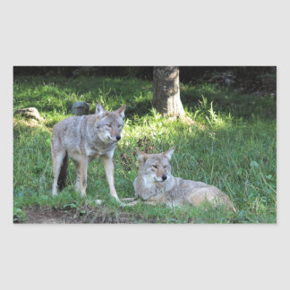 Coyote Collection Rectangular Sticker