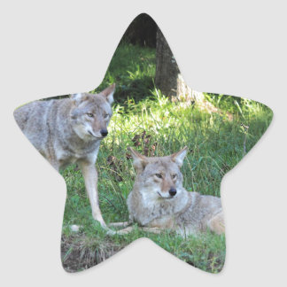 Coyote Collection Star Sticker